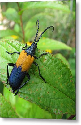 Colorful Insect Metal Print by Selma Glunn