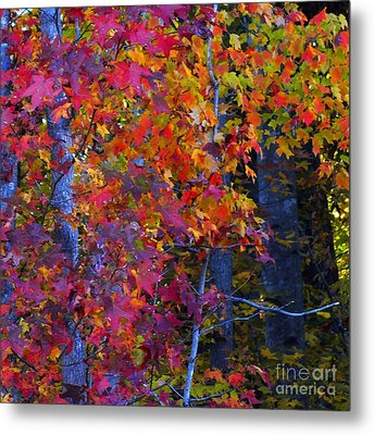 Colorful Maple Leaves Metal Print by Scott Cameron
