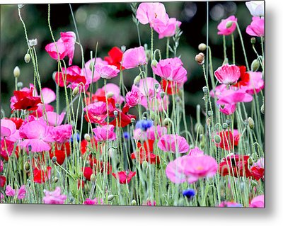 Metal Print featuring the photograph Colorful Poppies by Peggy Collins