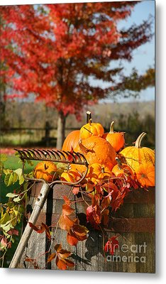 Colorful Pumpkins And Gourds Metal Print by Sandra Cunningham
