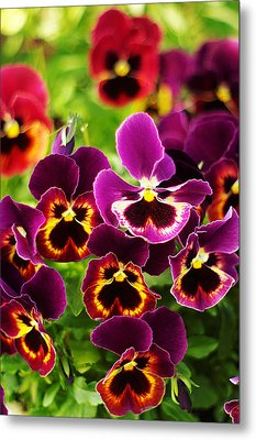 Metal Print featuring the photograph Colorful Purple Pansies by Suzanne Powers