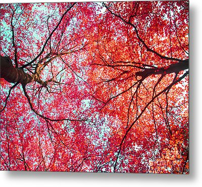Abstract Red Blue Nature Photography Metal Print by Artecco Fine Art Photography