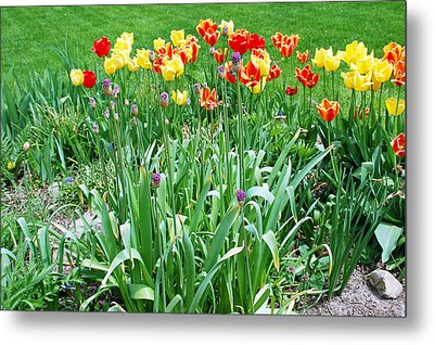 Colorful Spring Metal Print by Aimee L Maher Photography and Art Visit ALMGallerydotcom