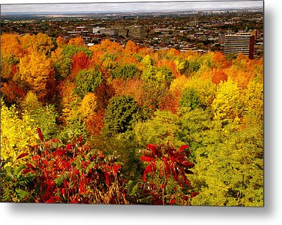 Colors And Colors  Metal Print by Jocelyne Choquette