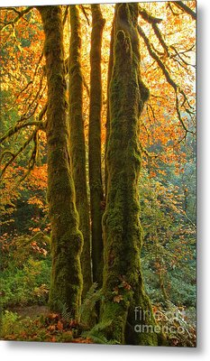Colors In The Rainforest Metal Print by Adam Jewell