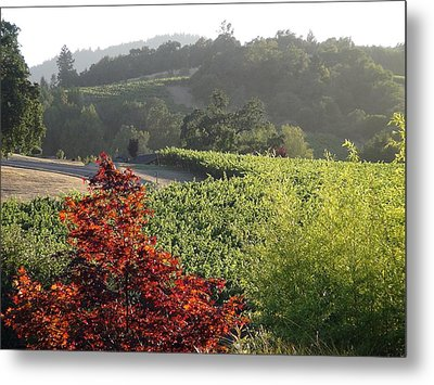 Colors Of Cali Metal Print
