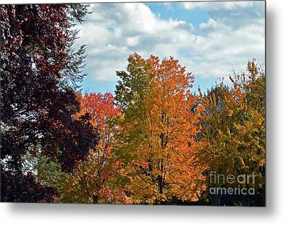 Metal Print featuring the photograph Colors Of Fall by Judy Wolinsky