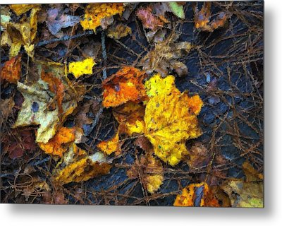 Metal Print featuring the photograph Colors Of Fall by Ludwig Keck