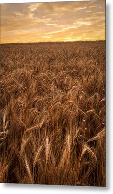 Colors Of Wheat Metal Print by Scott Bean