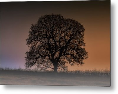 Metal Print featuring the photograph Colour Tree by Stewart Scott