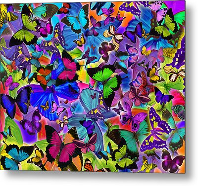 Colours Of Butterflies Metal Print by Alixandra Mullins