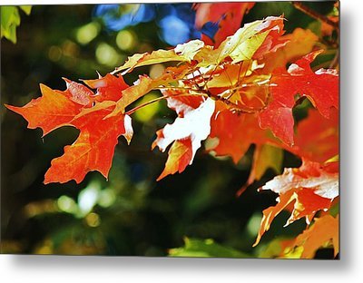 Metal Print featuring the photograph Colours Of Fall by Al Fritz