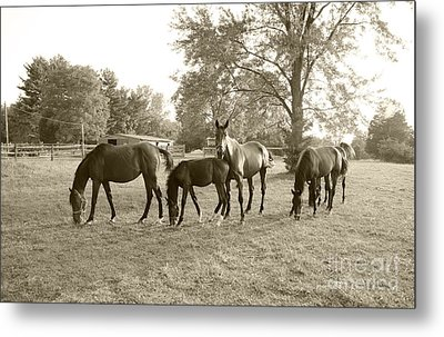 Colt And Family Metal Print