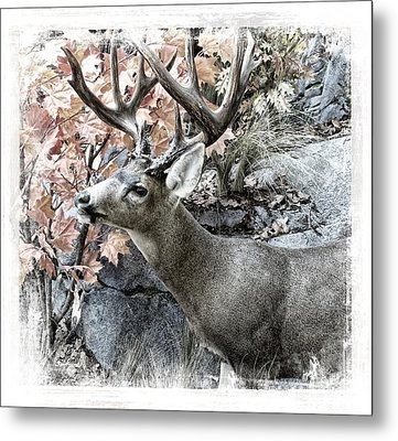 Metal Print featuring the photograph Columbia Blacktail Deer by Aaron Berg