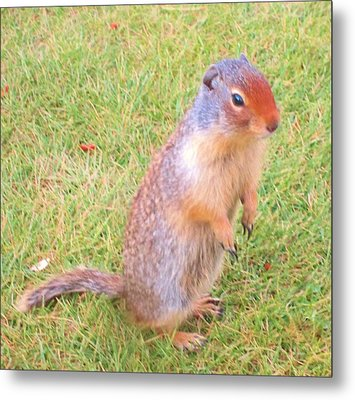 Columbian Ground Squirrel Metal Print by Cathy Long