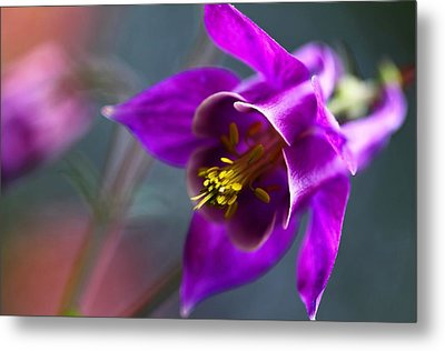 Columbine Abstract Metal Print by Katherine White
