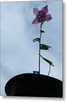 Metal Print featuring the photograph Columbine Climb by Brian Boyle