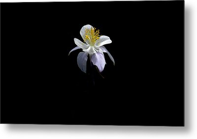 Metal Print featuring the photograph Columbine by David Andersen
