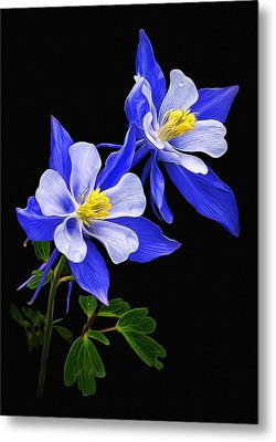 Metal Print featuring the photograph Columbine Duet by Priscilla Burgers