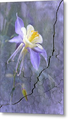 Columbine On Cracked Wall Metal Print