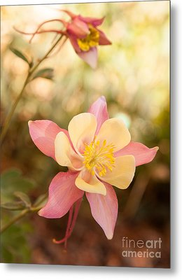 Metal Print featuring the photograph Columbine by Roselynne Broussard