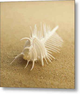 Comb Shell On Sand Metal Print by Science Photo Library
