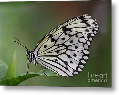 Come Sit With A Paper Kite Metal Print by Ruth Jolly