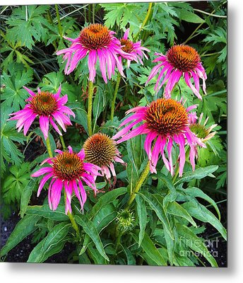 Metal Print featuring the photograph Comely Coneflowers by Meghan at FireBonnet Art