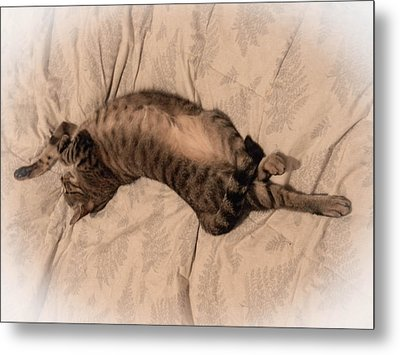Comfy Cat Metal Print by Christy Usilton