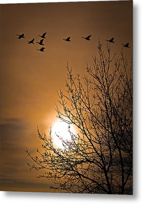 Coming Home In The Spring Metal Print by Bob Orsillo