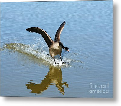 Coming In For A Landing Metal Print by Vivian Christopher
