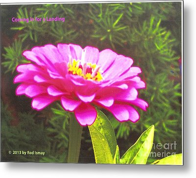 Coming In For A Landing   Warm Pink Metal Print