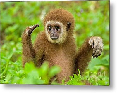 Coming To Terms Metal Print by Ashley Vincent