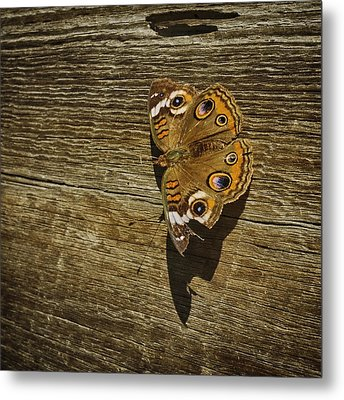 Common Buckeye With Torn Wing Metal Print by Lynn Palmer