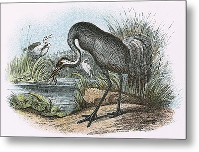 Common Crane Metal Print
