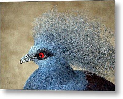 Common Crowned Pigeon Metal Print by Cynthia Guinn