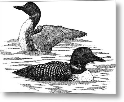 Common Loons Metal Print by Roger Hall