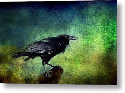 Common Raven Metal Print