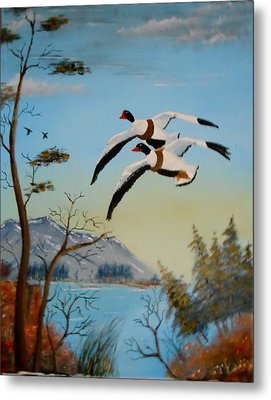 Metal Print featuring the painting Common Shelducks by Al  Johannessen