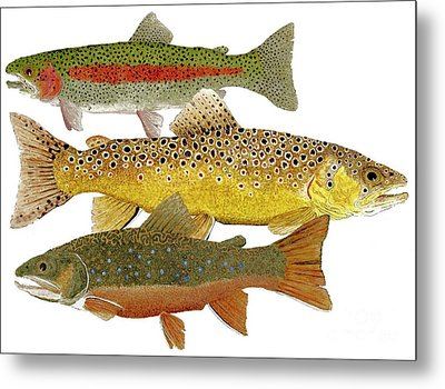 Common Trout  Rainbow Brown And Brook Metal Print by Thom Glace