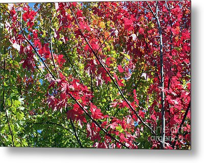 Metal Print featuring the photograph Complimentary Colors by Debbie Hart