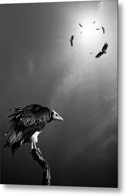 Conceptual - Vultures Awaiting Metal Print