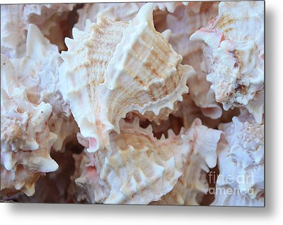 Conches Metal Print by Carol Groenen