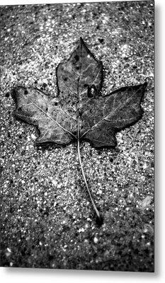 Concrete Leaf Metal Print