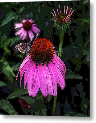 Cone Flower And Butterfly Metal Print