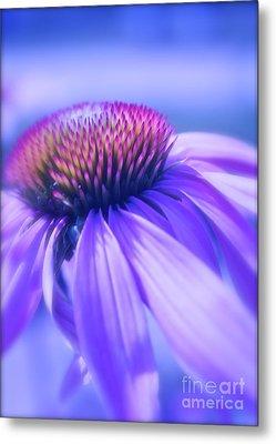Cone Flower In Pastels  Metal Print