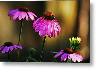 Cone Flower Shines... Metal Print by Al Fritz