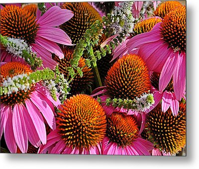 Cone Flowers And Mint Metal Print