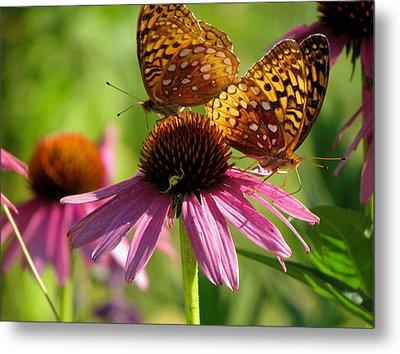 Coneflower Butterflies Metal Print by David T Wilkinson