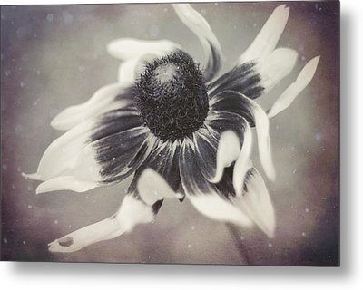 Coneflower In Monochrome Metal Print